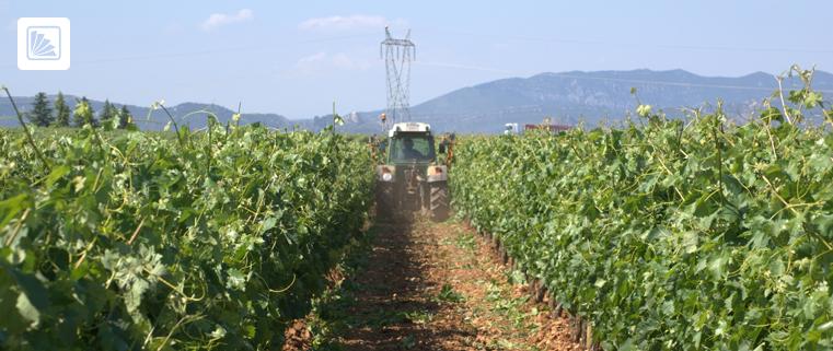 trabajo agrario - remuneraciones - campo - país - resolución - legislación